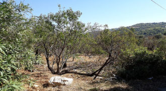 Land for Sale Ain Kfaa Jbeil Area 1210Sqm