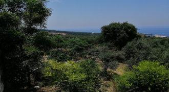 Land for Sale Berbara Jbeil Area 1107Sqm