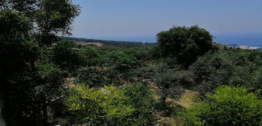 Land for Sale Berbara Jbeil Area 1107Sqm